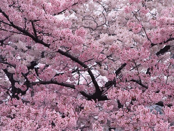 аллергия на цветение деревьев
