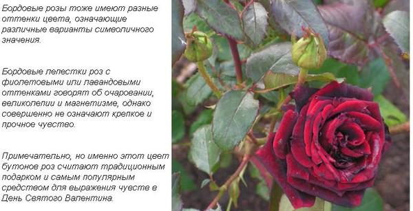 классификатор значения цвета роз в подарок составить
