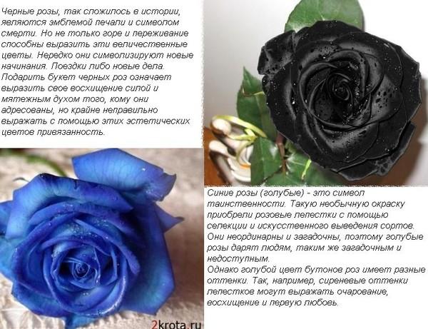 Что значит имя роза и его значение