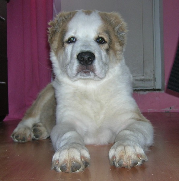 щенок грызет бетон