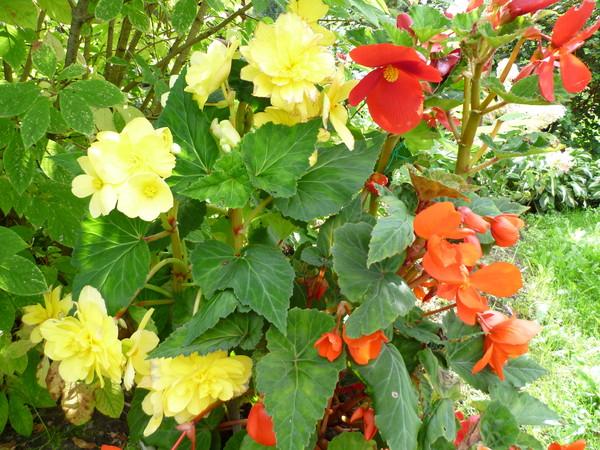 Береза какие цветы посадить под березой