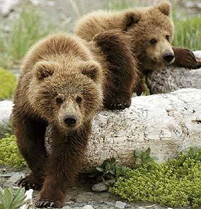 Картинки медведь вылезает весной из берлоги