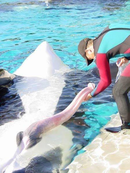 Половой член кита фото фото 404-720