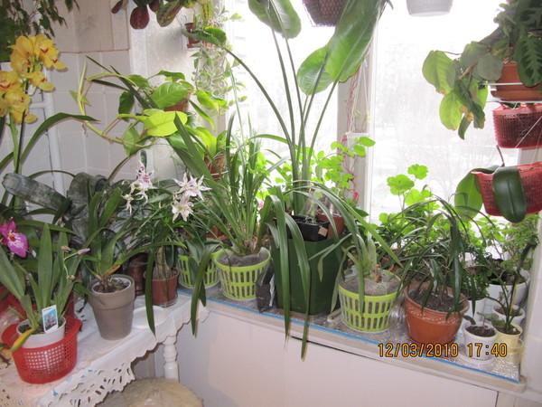 Почему в доме не растут цветы