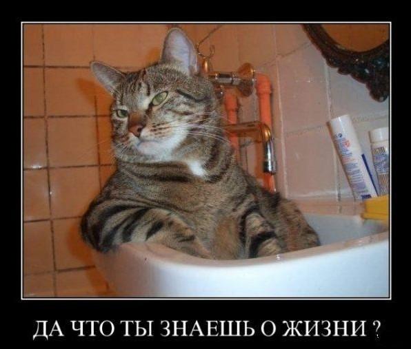 нужен ли коту лежак