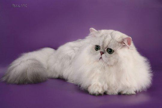 Коты экстремалы это