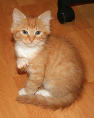 скачать картинки котов рыжих