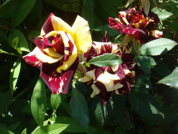 Картинки цветы со стихами имя роза