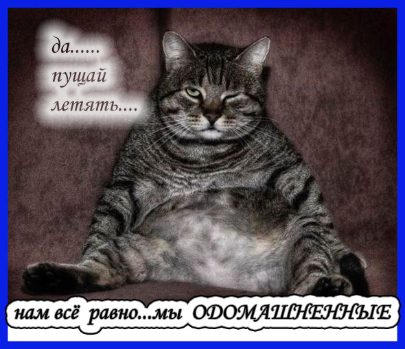https://otvet.imgsmail.ru/download/f7a2bb7e53d7c72637acf177d60663ba_i-917.jpg