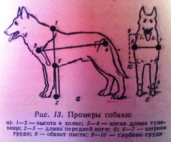 картинка измерения собаки кадры съемочной площадки