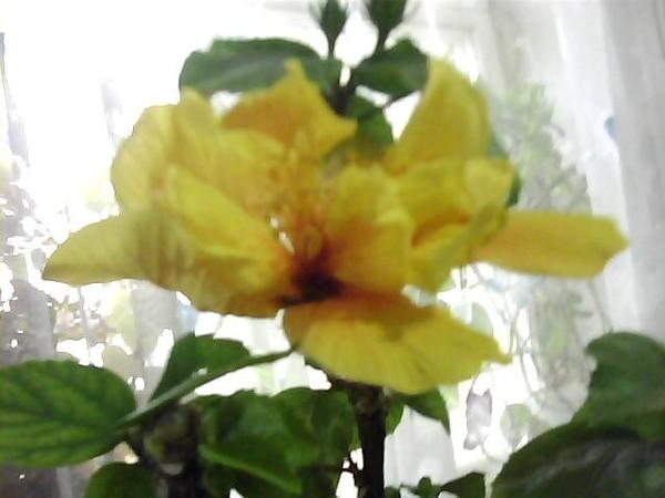 Гисметео погоде, пересаживать розы во сне ответы майл собираются