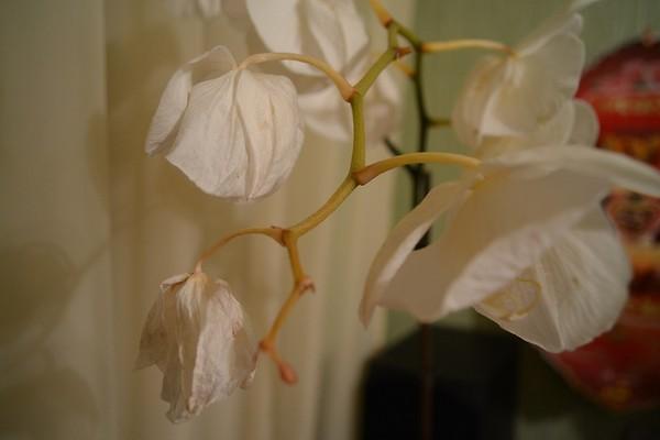 Орхидея что делать когда отцветет