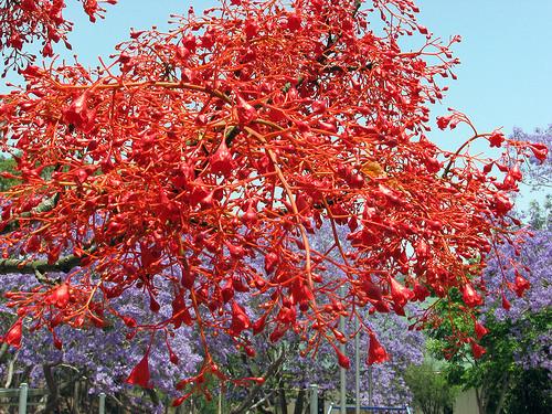 какие цветущие деревья вызывают аллергию