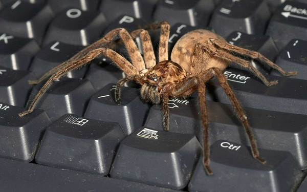 у паука сколько глаз фото