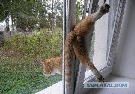 Если кот спрыгнул с балкона