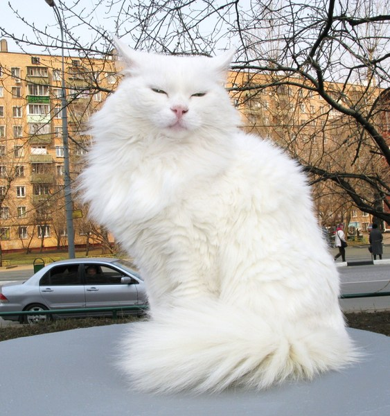 Кошка Худеет И