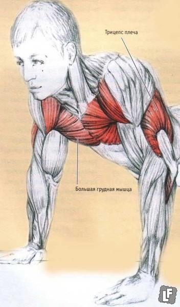 Отжимания развивают мышцы рук,