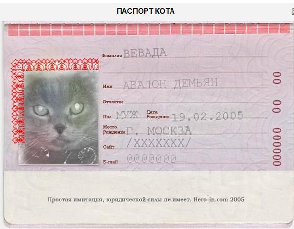 Как сделать паспорт на кота 859