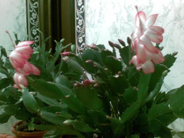 Цветы любящие солнце и жару