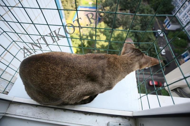Выгул кота на окне саранск