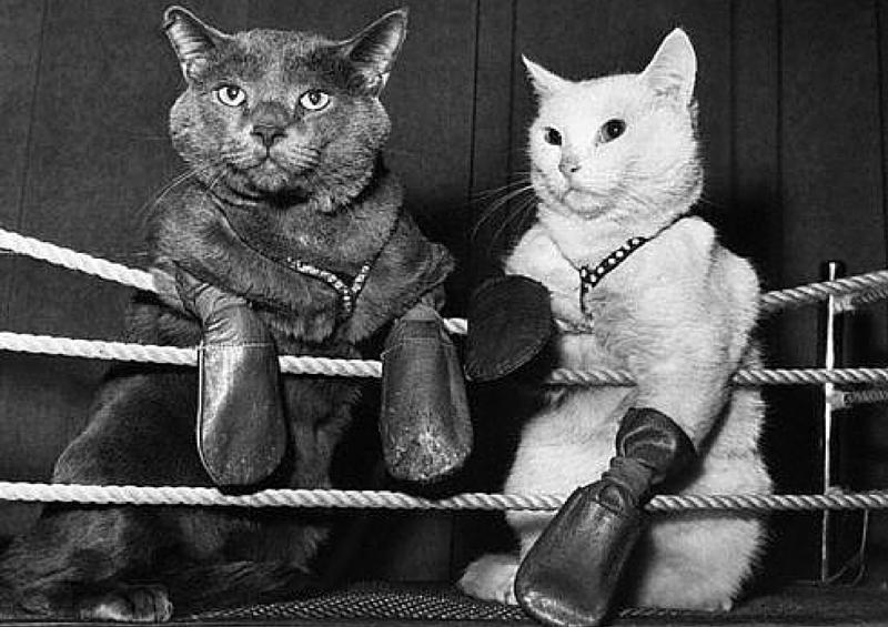 картинки кошки с битами открытка