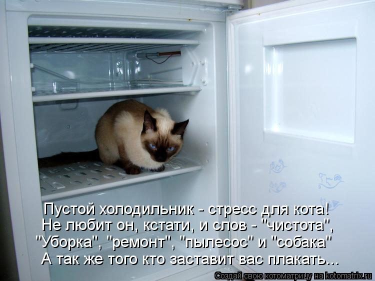 останется неизменной пустой холодильник демотиваторы арки тоннели