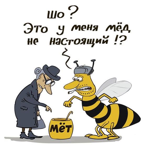 Имя даша, мед веселые картинки