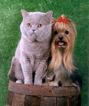 Щенок и кот как ужиться