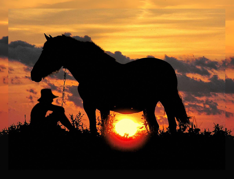 конь на закате картинки плед описанием