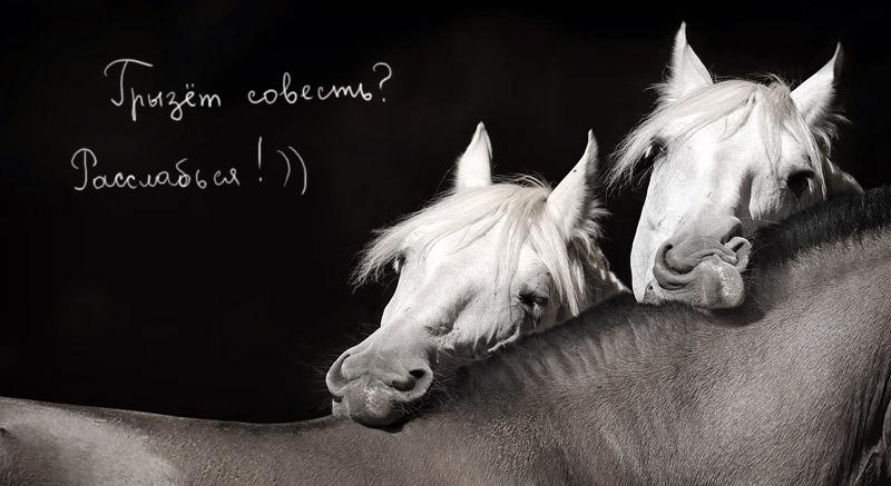 Открытки, картинки с добрым утром и хорошего дня прикольные с лошадками