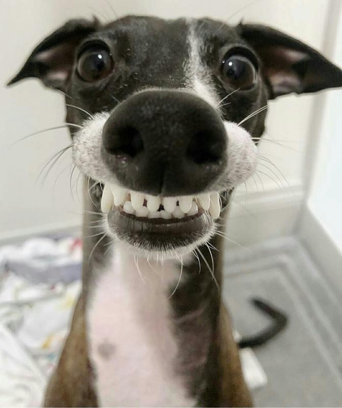 Собака смешные цитаты, картинка