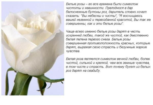 значения цвета роз в подарок песни: