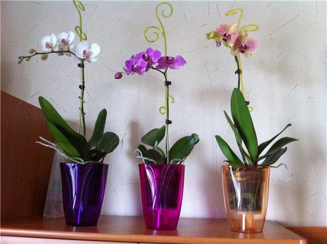 Какие горшки для орхидей нужны, как правильно выбрать емкость