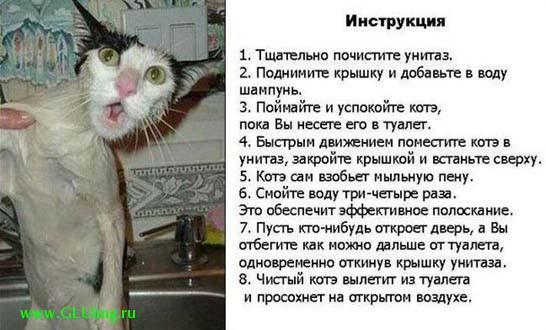 инструкция как помыть кота