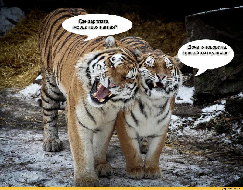 Картинки с тигром и надписями