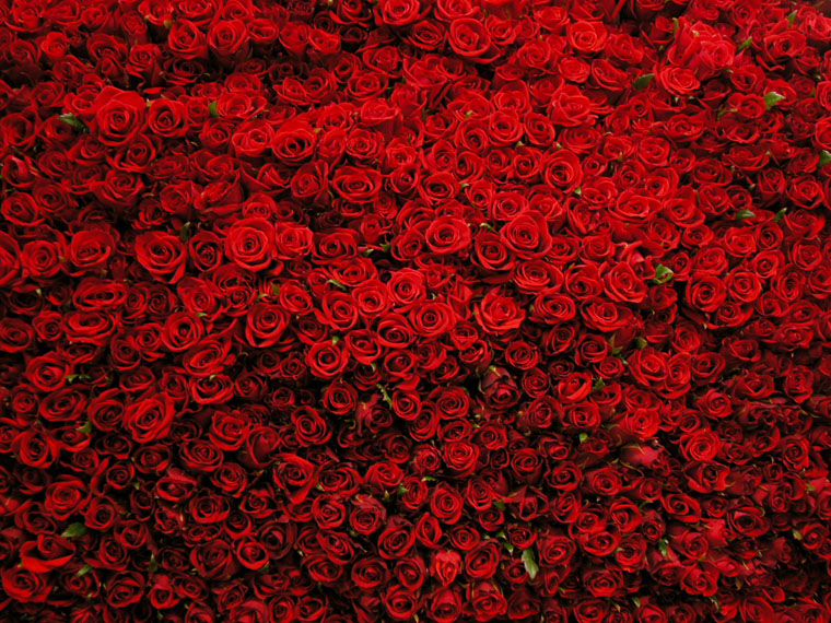 всего миллион алых роз картинки гиф торфом