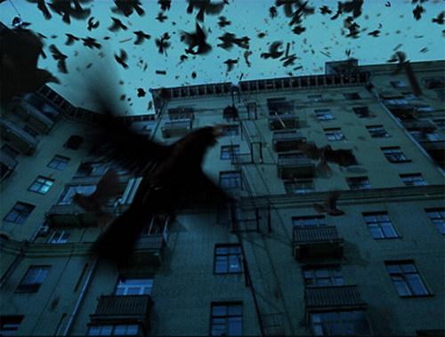 можете посмотреть много птиц собирается на крышах еще раз, что