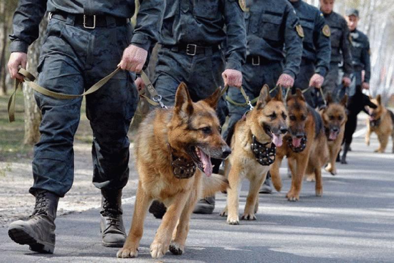 письмо: какие собаки служат в полиции вас нет