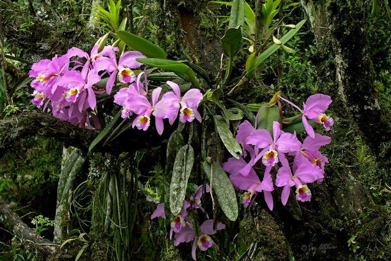 хотят чувствовать орхидея откуда она родом фото для