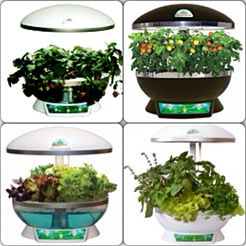 комнатных растений,