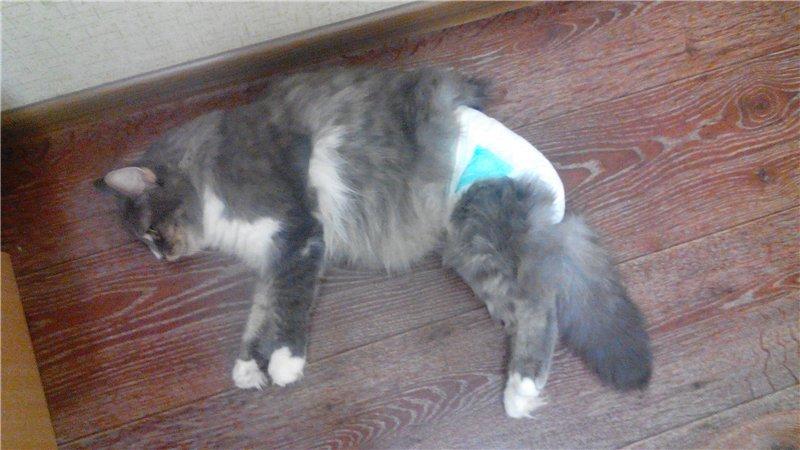 low cost cat spay nj