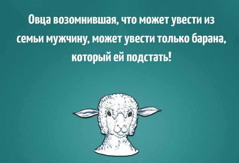 овца может увести только барана картинки