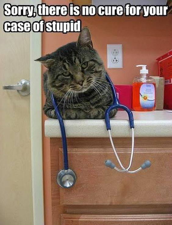 Cat urine rug doctor
