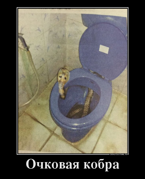Смешные картинки очковая змея