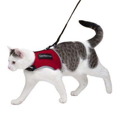 get rid of cat spray