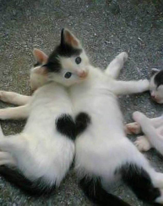 cat marking its territory