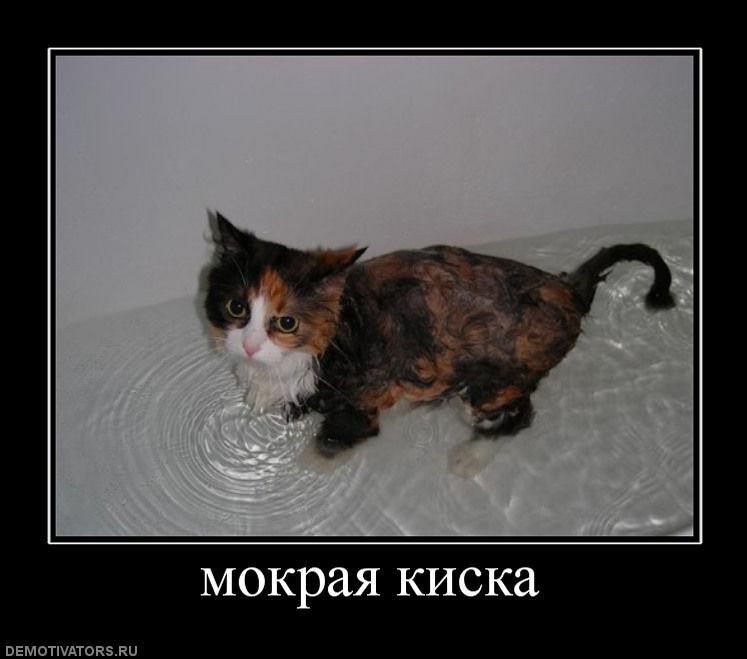 Картинка с мокрм киска фото 733-903