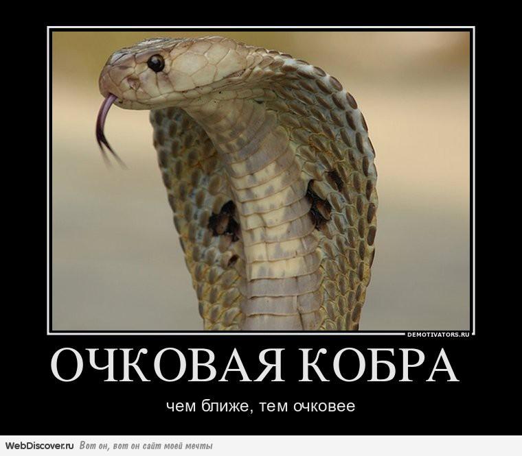Днем, картинка очковая змея смешная