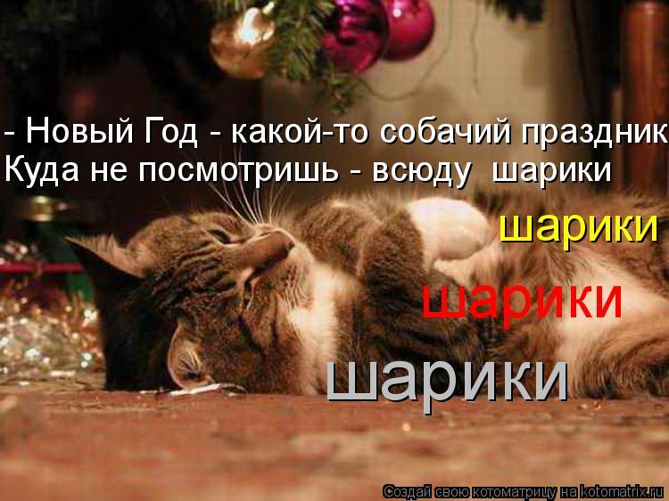 День открытки, новый год смешные картинки с животными с надписями