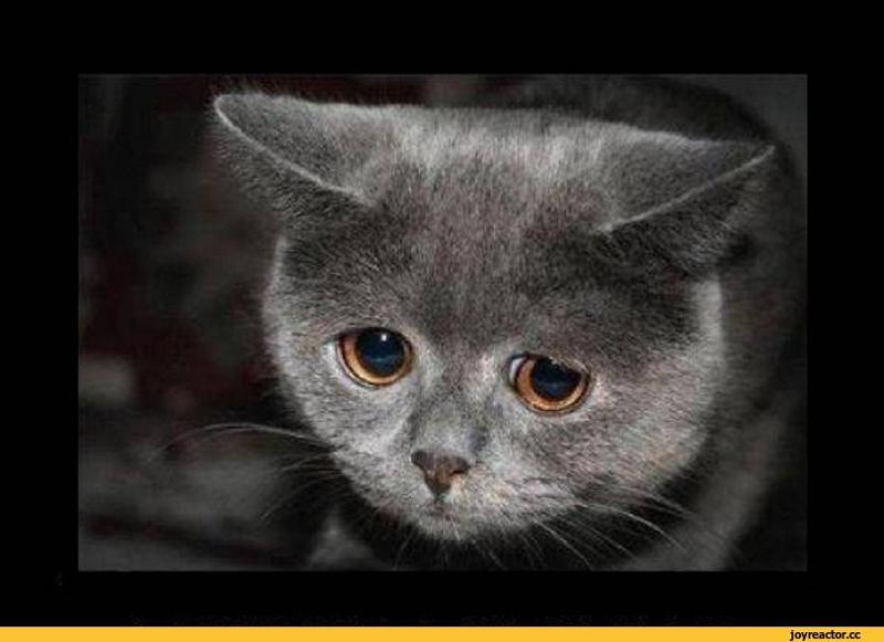 базе газель картинки с плачущим котом говорить слово нет мастерских, чтоб разглядеть